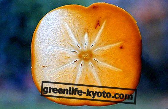 La papaya fermentada, la fuente natural de los antioxidantes.