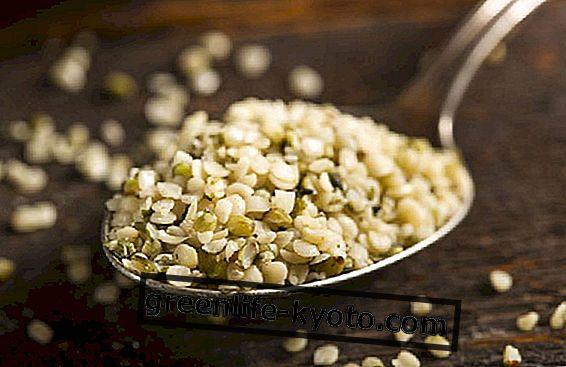 Recepti s semeni konoplje