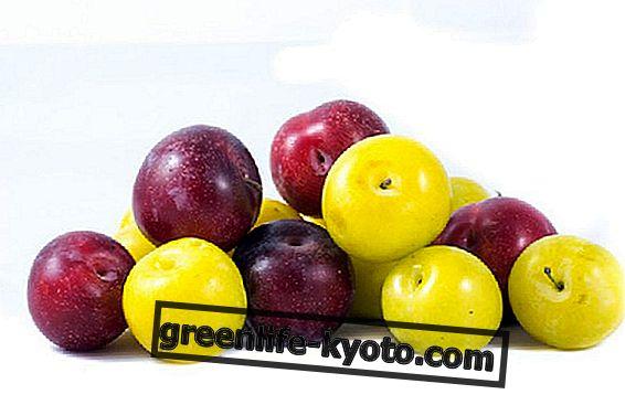 Prune roșii și galbene, proprietăți