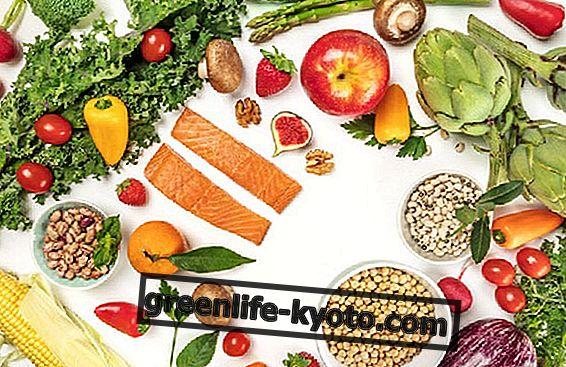 Växt- eller djurproteiner