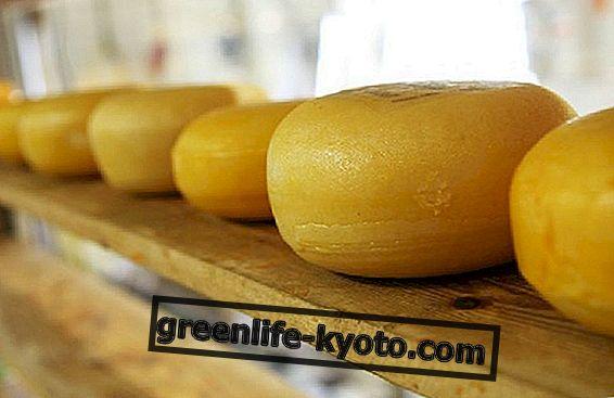 Шта треба знати о сиру