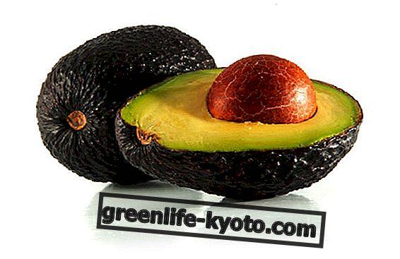 Avocado Hass, गुण और विशेषताएं