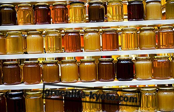 Honing: welke te kiezen en wanneer te eten