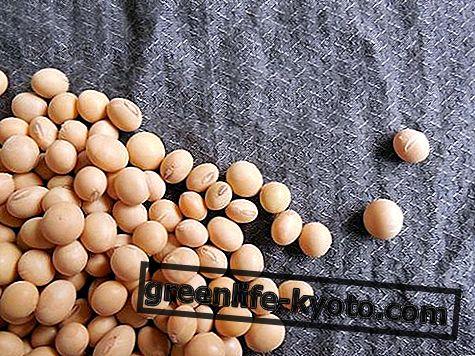 Sójové boby: vlastnosti, výživové hodnoty, kalorie