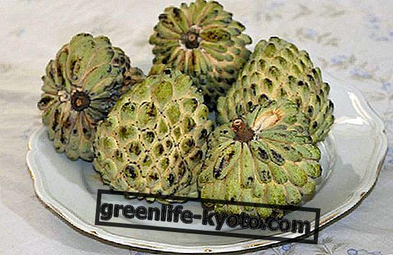 Ahemoya, vlastnosti a výhody cherimoya hybrid