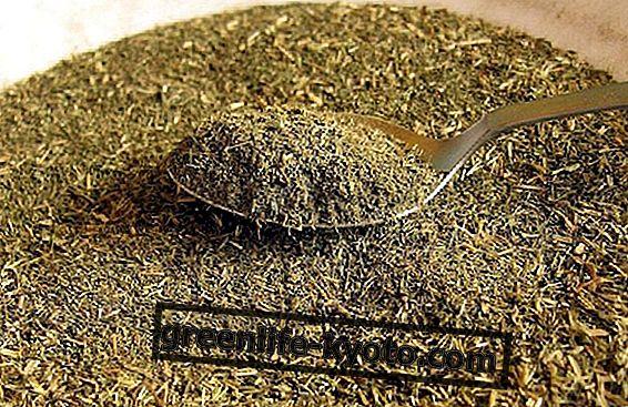 Stevia: contraindicaciones del edulcorante natural.