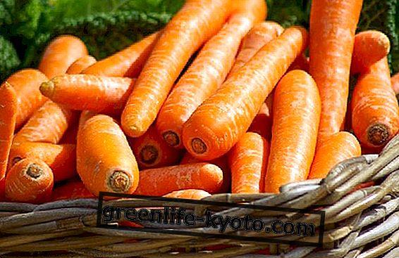 Porkkana, puutarhalta pöydälle