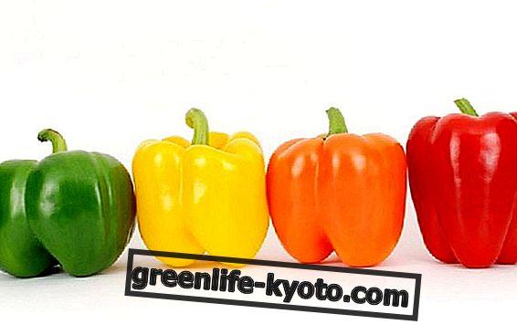 Peppers, suvine köögivilja par excellence