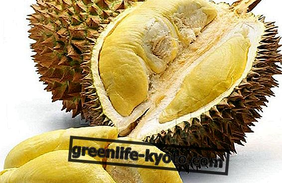 Durian: the fruit that you love or hate