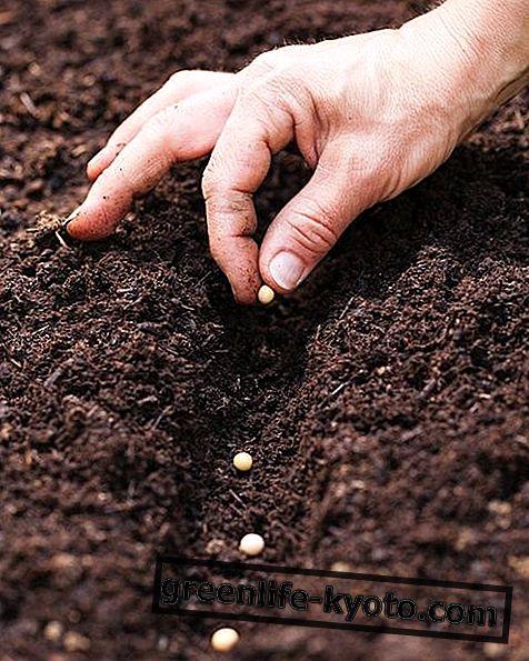 Agricultura sinérgica, normas y principios.