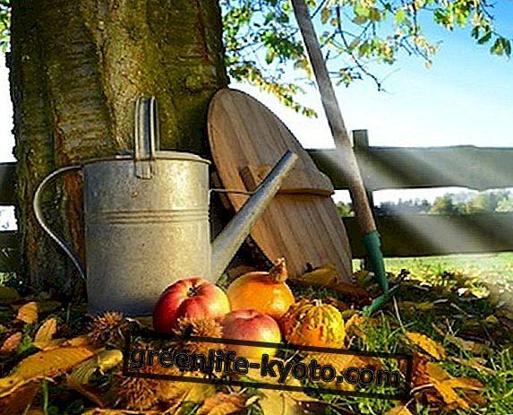 Октомври плодове и зеленчуци