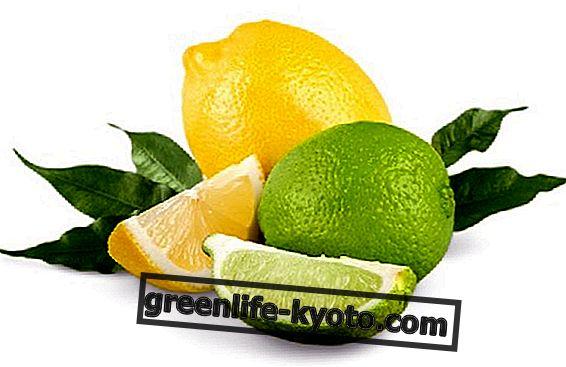 Võrdluses lubi ja sidrun, kaks tsitrusvilja