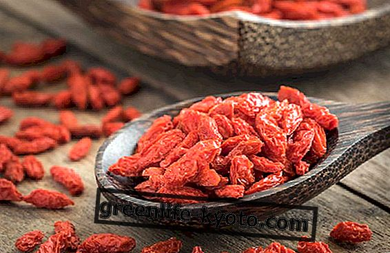 Goji berries, how to take them