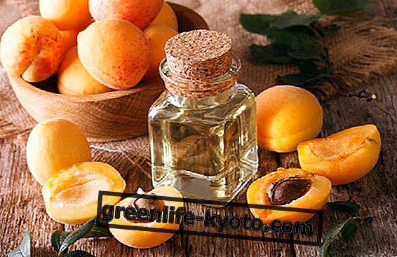 Armellina : 살구 씨앗의 속성