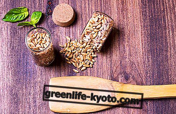 Ühe tera nisu: omadused, kasutamine ja kust seda leida