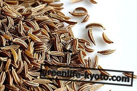 Aceite esencial de carvi: propiedades, uso y contraindicaciones.