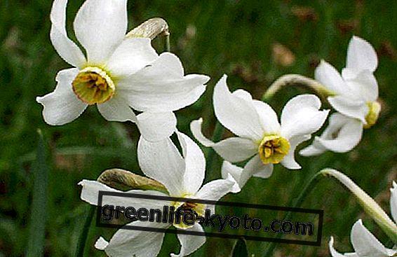 बाख फूल और नई माँ, बच्चे और किशोर