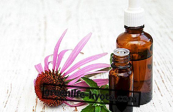 Echinacea moedertinctuur, het gebruik