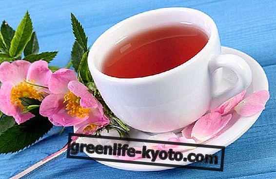 Rose pinggul teh untuk kanak-kanak