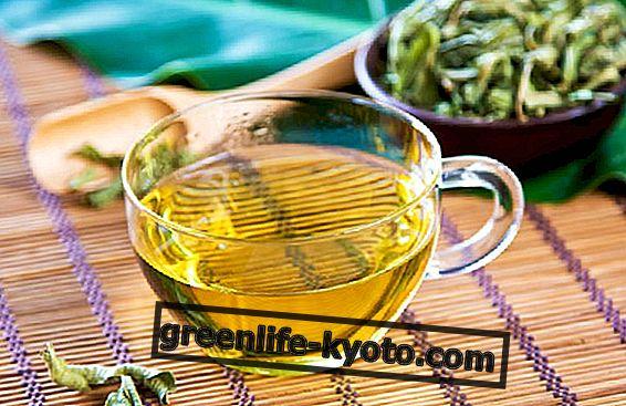 वर्बेना हर्बल चाय: गुण और उपयोग