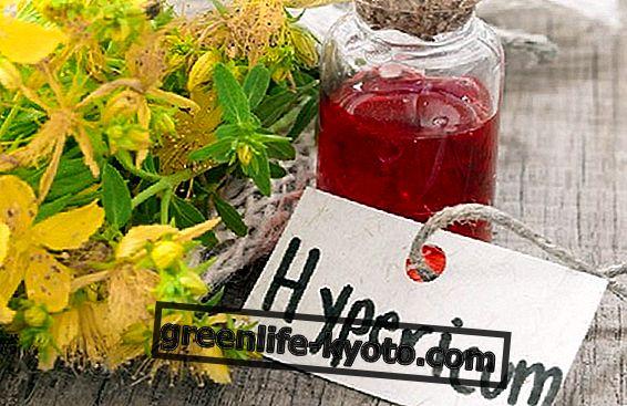 オトギリソウ、天然抗炎症剤
