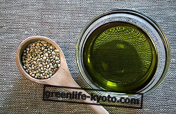 Уље од конопље у Аиурведи, користи и употреба