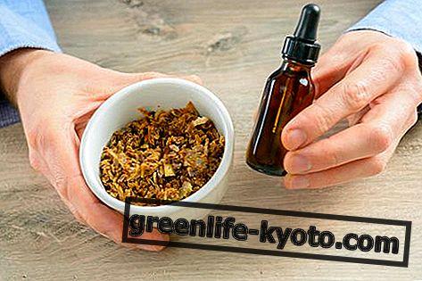 Tinktura majke propolisa: priprema, svojstva i upotreba