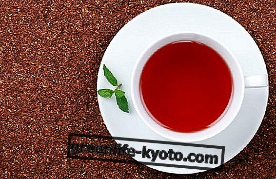 Rooibos rouge, propriétés et avantages
