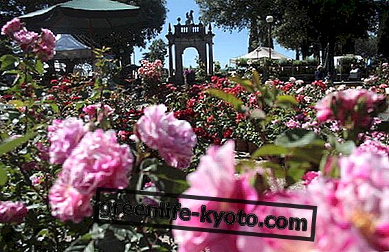 Perugia Flower Show 2012: puutarhan hoito avaa sydämen