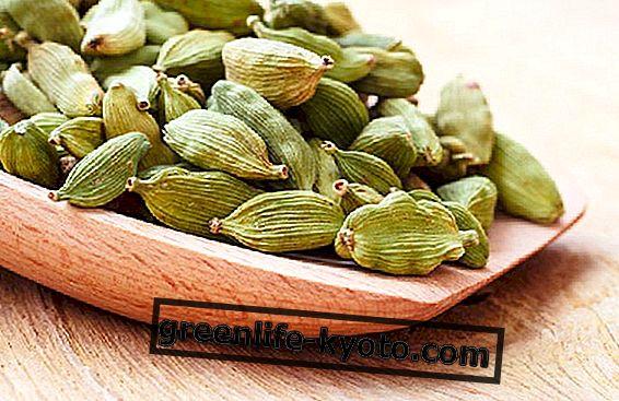 Cardamom-kasviperäisten teetä suolistoon