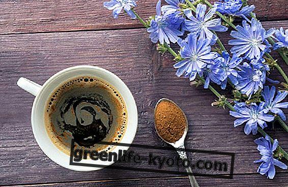 Cikória kávé, a recept