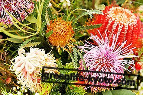 Esencias florales de arbusto
