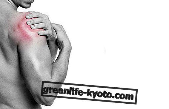 Moringa oleifera: bitkinin anti-enflamatuar özellikleri