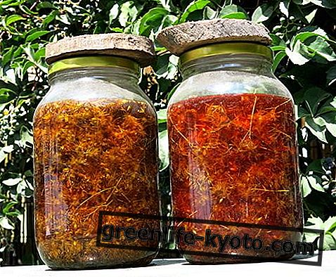 Hypericum oil: özellikleri, özellikleri ve faydaları