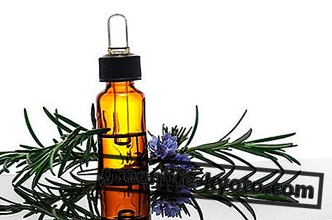 Етерично масло от розмарин: свойства, употреба и противопоказания