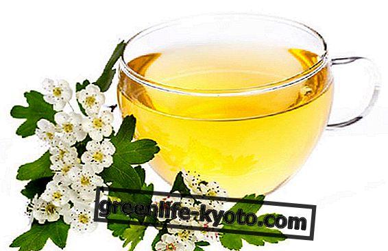 Espino: té de hierbas para el corazón.