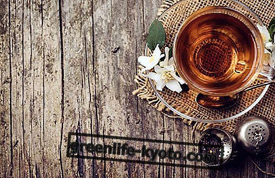 Jazmino žalioji arbata, savybės ir nauda