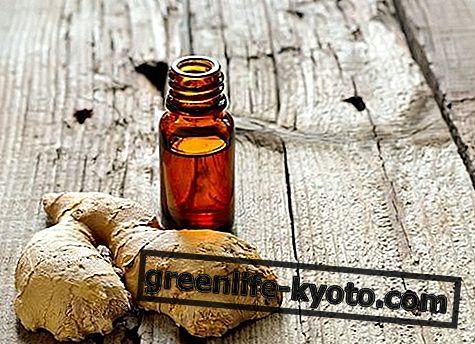Ginger essentiel olie: egenskaber, brug og kontraindikationer