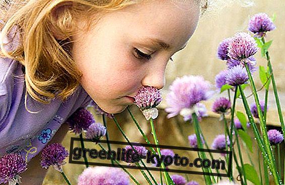 Bacho gėlės mokymosi kursai