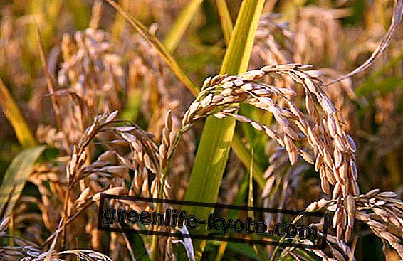 米油:自然ななめし