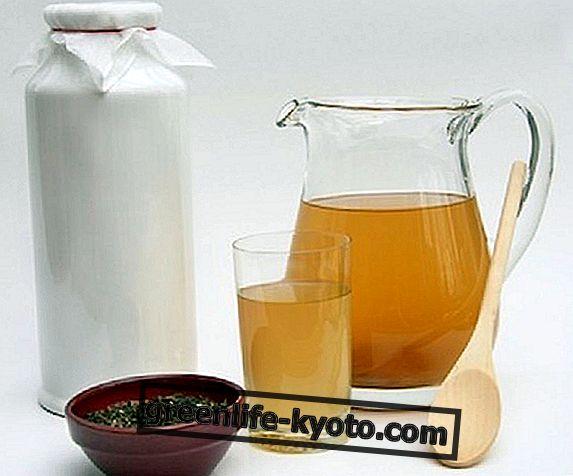 Приготування чаю Kombucha