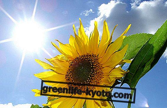 Planetas y plantas: la naturaleza celeste de las hierbas.