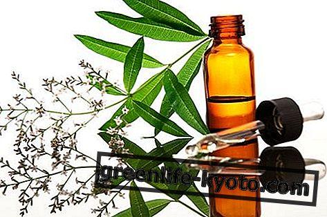 Aceite esencial de verbena: propiedades, uso y contraindicaciones.