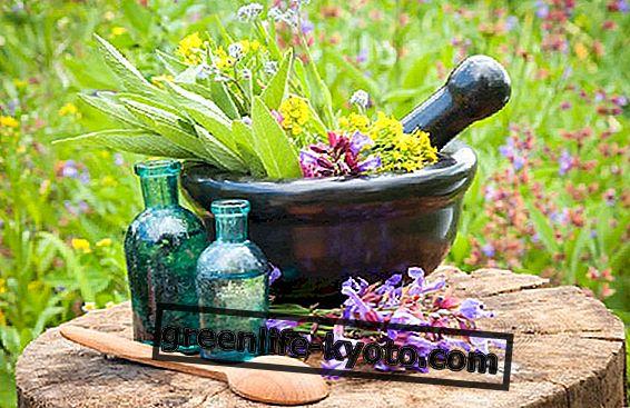 Απολυμαντικά και βακτηριοκτόνα φυτά