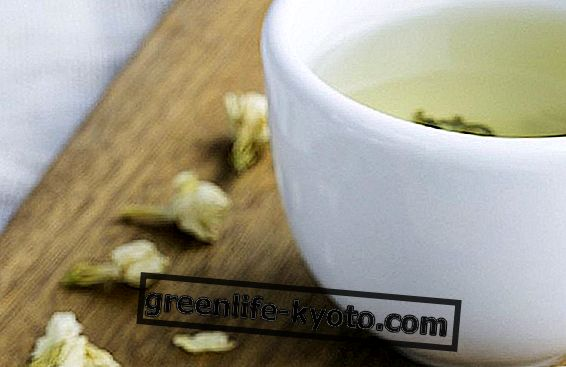 Jasmine para chá de ervas: benefícios e usos