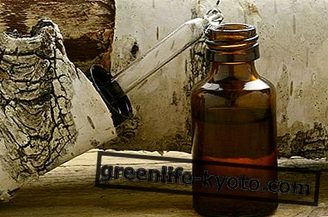 Eterično olje breze: lastnosti, uporaba in kontraindikacije