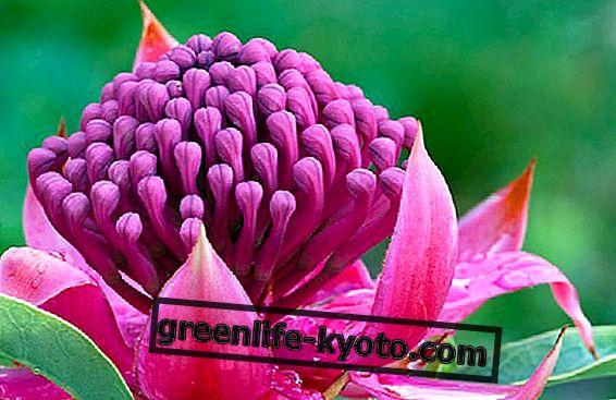 Den menneskelige essens og blomstens essenser i Ian White