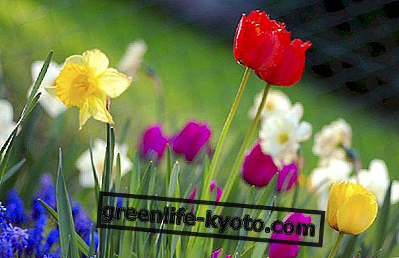 Illóolajok és tavaszi betegségek