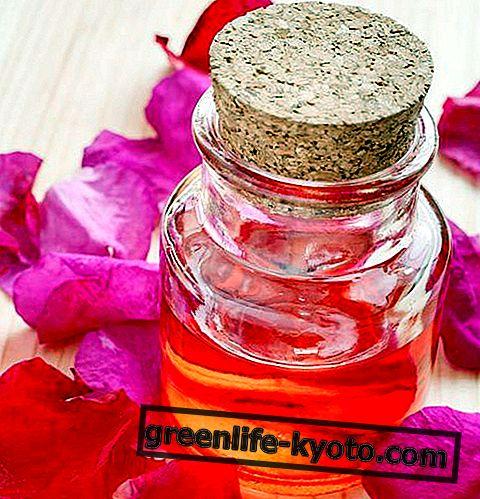 Huile essentielle de Rose Musquée: propriétés, utilisation et contre-indications