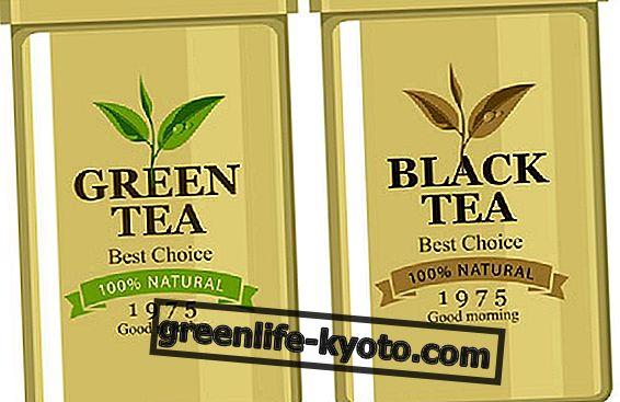 Црни чај и зелени чај, својства и разлике